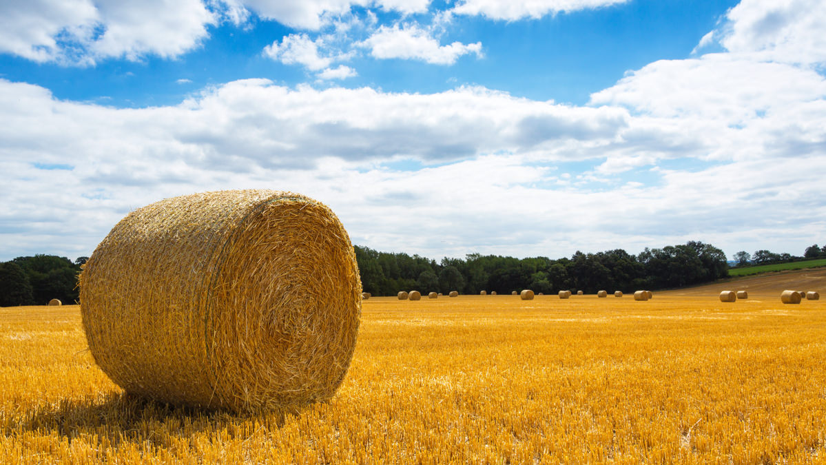 Round haybales on a patch of land on a sunny day
